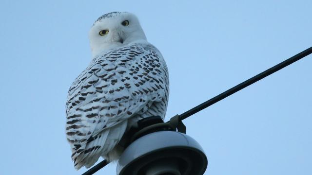 All about birds fairfield ohio