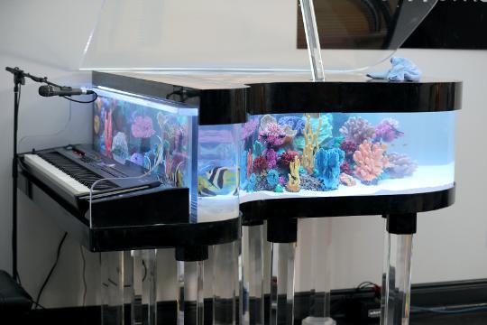 Design Aquarium Kast : Animal planet s tanked to feature aquarium at piano works mall