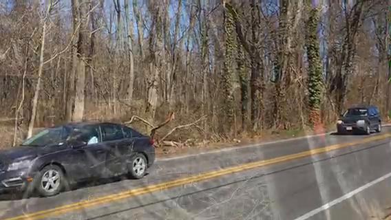 Watch: Hazardous trees coming down