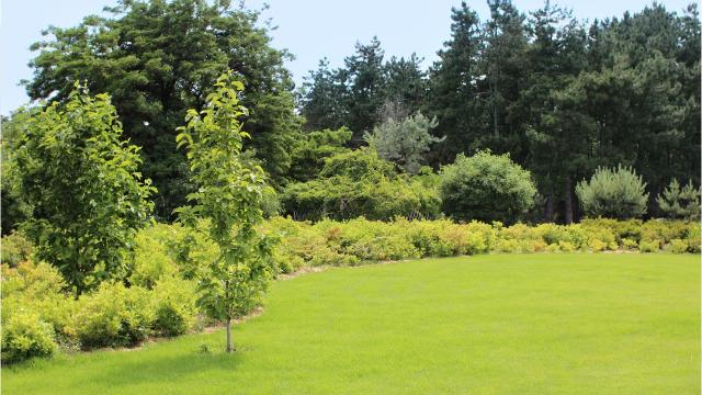 5 tips to have a better lawn in spring: Start in September.