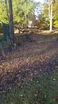 Video: Police rescue deer caught in soccer net