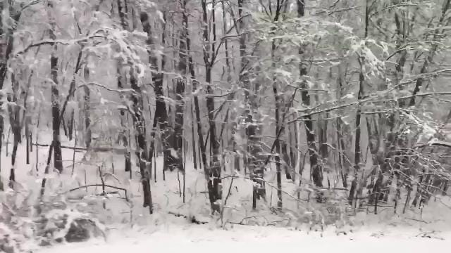 Video: Snow blankets trees