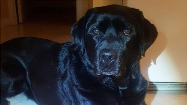 Meet Daisy, the Westchester County Police arson detection dog.
