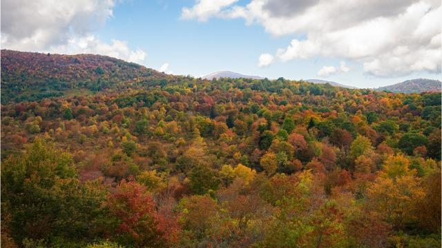 Will Asheville fall color suffer from extended summer weather?