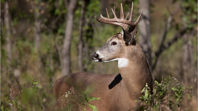 The N.C. Wildlife Resource Commission reveals the No. 1 cause of hunting-related fatalities in North Carolina and reminds hunters of safety rules and regulations to avoid injuries and death.