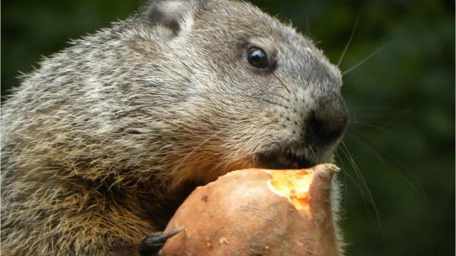 A reader asks why groundhogs hang out so often right by the roadside, which frequently leads to them becoming roadkill.