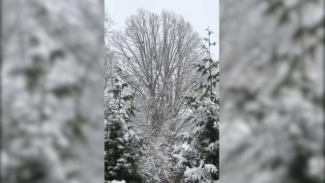 Snow covers tree in West Asheville as it continues to fall December 8, 2017.
