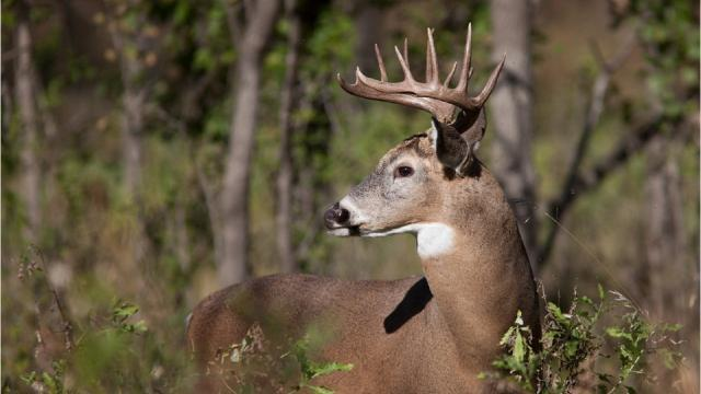 Hunting season changes in store for WNC