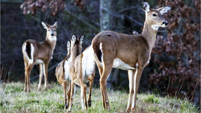 Readers want to know if the deer population has risen, and if it's legal to take recyclables out of someone else's bins.