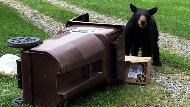 "A reader in East Asheville has a real problem with bears getting into trash and wonders why the city doesn't provide ""bear-proof"" trash cans."