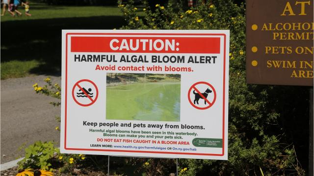 Signs cautioning visitors about blue-green algae blooms are scattered throughout the beach area at Taughannock Falls State Park.