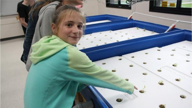 The aquaponics program is part of Owego Apalachin's STEAM Academy.