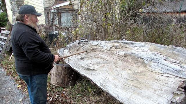 Horseheads man hopes 300-year-old cherry tree might hold some remnants from the Revolutionary War Battle of Newtown.