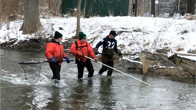 "DEC staffers conduct their annual rainbow trout ""shocking"" in Catharine Creek to assess the spring spawning run from Seneca Lake."