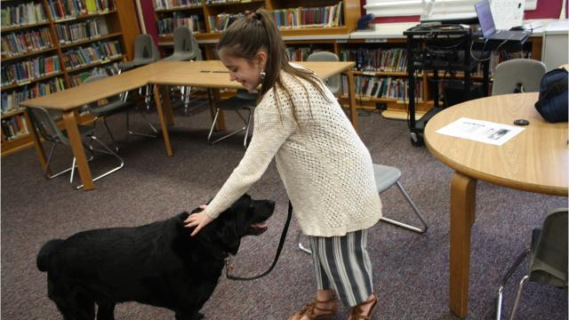 Rhonda Ashley, aCurriculum Instructor/AIS Service Provider at A.F.Palmer Elementary School, has taught an animal handling class at the school for three years.