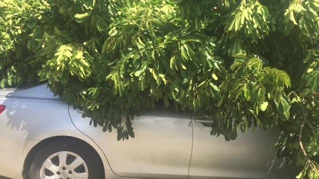 Update Hurricane Irma: A tree falls in Dunbar