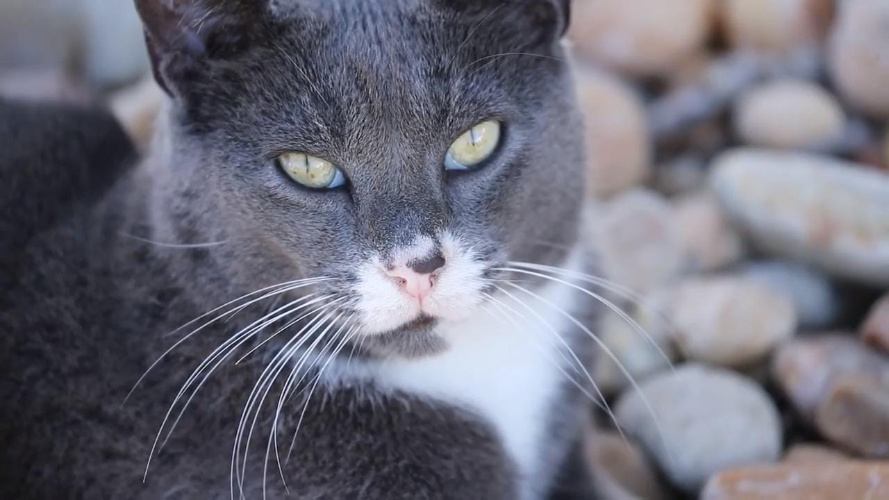 Louie is a Cape Coral cat who's cared for and beloved by everyone on this street. They all buy cat food to make sure he's fed, some have spots for him to rest. He walks with them when they go on walks down the street.