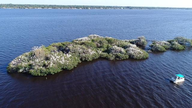 Ecologist Church Roberts is piloting a drone to survey wading bird nests and breeding pairs on Lenore Island in the Caloosahatchee River, near Fort Myers, Florida. This is a video clip from the survey. His consulting firm, Church Environmental, earned a grant from the Charlotte Harbor National Estuary Program to do this work.