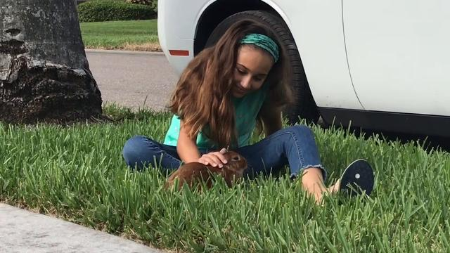 A south Fort Myers family's pet rabbit was found alive a day after a fire destroyed their home.