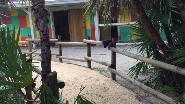 Brevard Zoo staff preps animals for Hurricane Irma