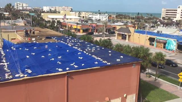 Hurricane Irma winds peel off Cocoa Beach City Hall roof