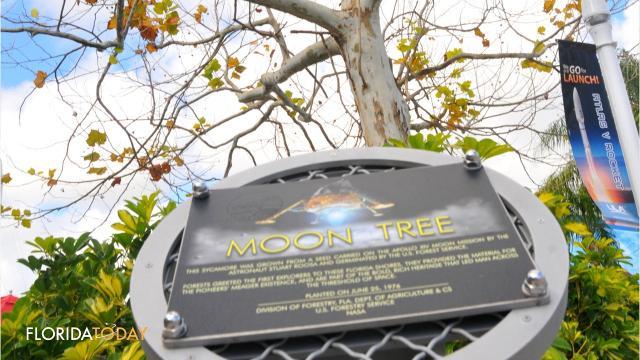 Irma topples NASA's 'Moon Tree' that flew on Apollo 14