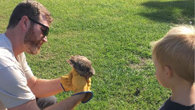 Palm Bay baby screech owls get new home