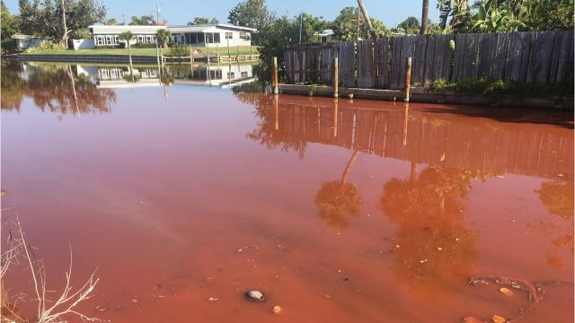 Cocoa Beach Canals Are Tomato Soup Red Again