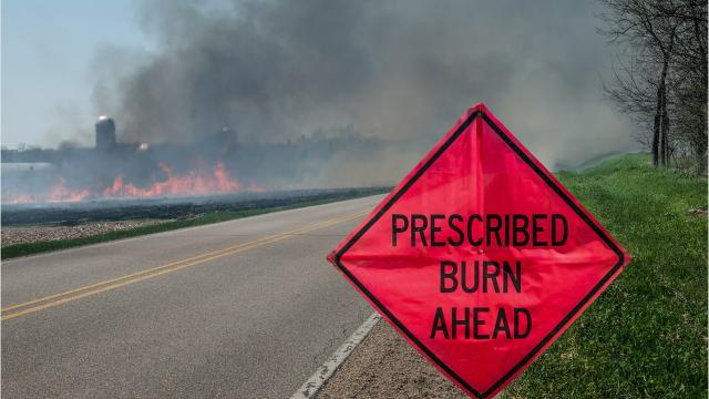Prescribed burns are a cost-effective tool to reduce fuel buildups, which can cause dangerous wildfire conditions. They provide increased protection to people, their homes, wildlife and the forest. GINNY BEAGAN/FLORIDA TODAY