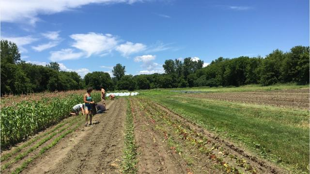 The owners and employees of Pitchfork Farm were in the fields working on the Fourth.
