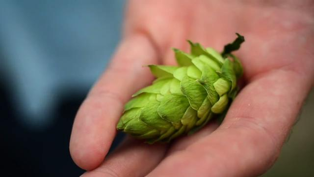 Hops farm fight brewing in Charlotte