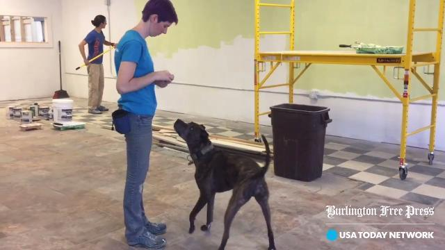 Dog training facility to occupy former Pearl Street Diner space