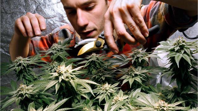 Vermont's marijuana law 101