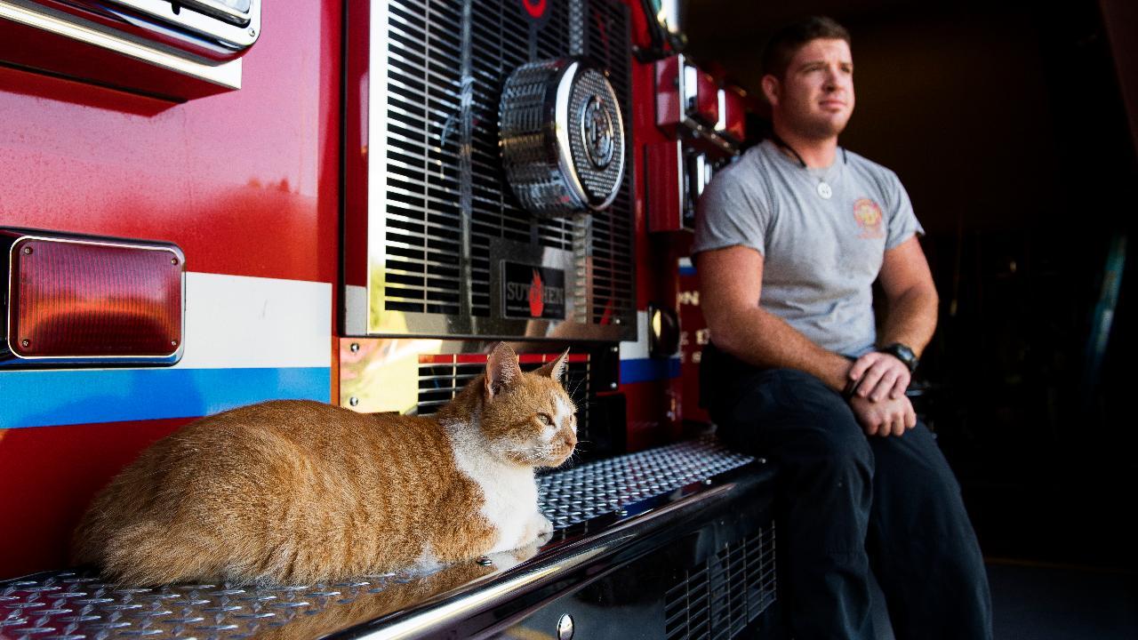 Hasil gambar untuk flame cat greenville