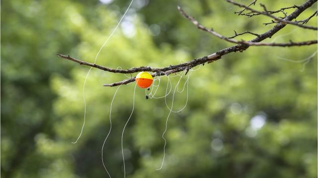Fishing pro Mike Del Visco knows how to get your fishing line out of a tree, if it ever ends up there.