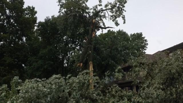 An uprooted tree in the first block of South 17th Street blocked traffic and damaged a tree and house across the street. The displaced roots, turf and sidewalk stood 7 feet tall.