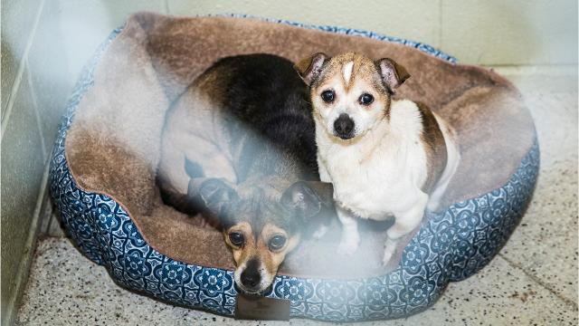 Full animal shelter looking for adoptions, volunteers