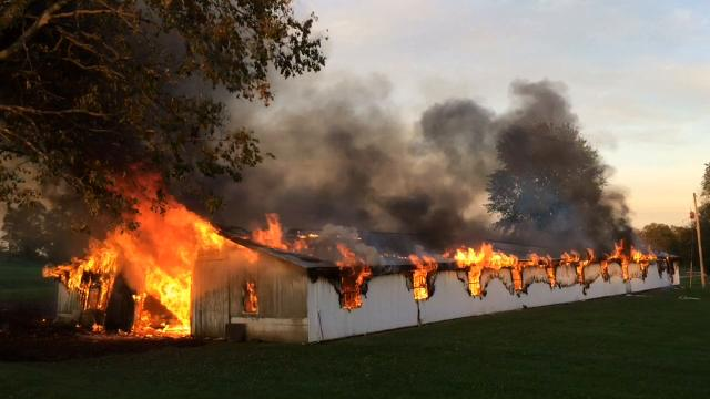 Firefighters encountered a dangerously sagging roof and exploding ammunition Thursday evening as fire destroyed a former chicken barn.