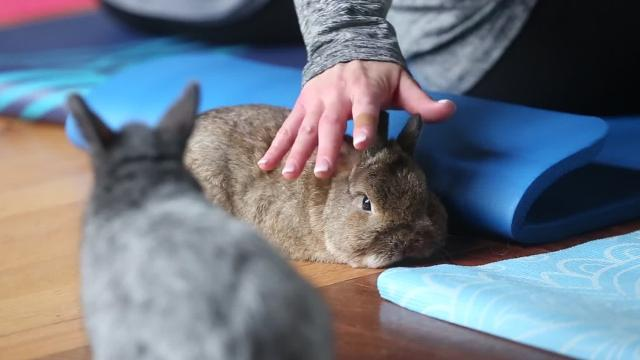 Studio Exhale held two Yoga With Bunnies sessions in honor of the holiday season.