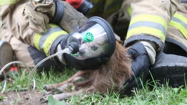 Twelve dogs, five cats and a pig rescued from house fire