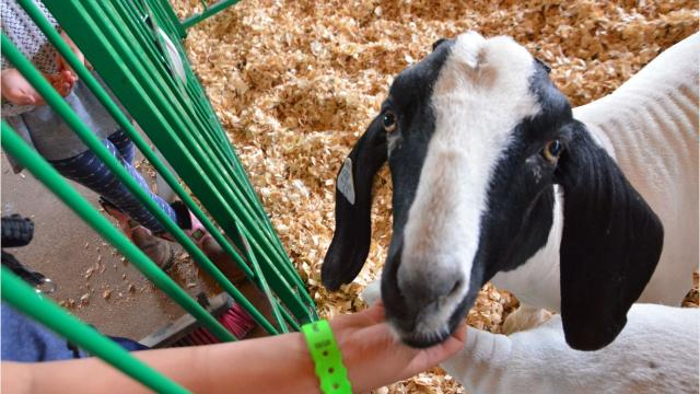 Calhoun County Fair is in full swing on Tuesday, with events happening all week.