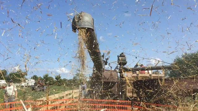 Watch as an antique threshing machine shoots out a blizzard of chaff and a stream of wheat