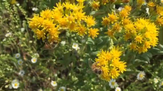 Bees, wasps and hornets are out foraging for nectar and pollen