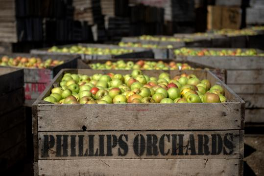 Employees at the Phillips Orchards and Cider Mill produce apple cider to be sold on Thursday, Sept. 28, 2017, in St. Johns.