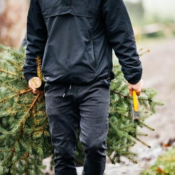 Here's everything you need to know about fresh-cut Christmas trees.