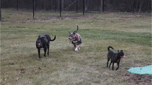 The new dog park in Livonia at Bicentennial opened Monday, Dec. 4.