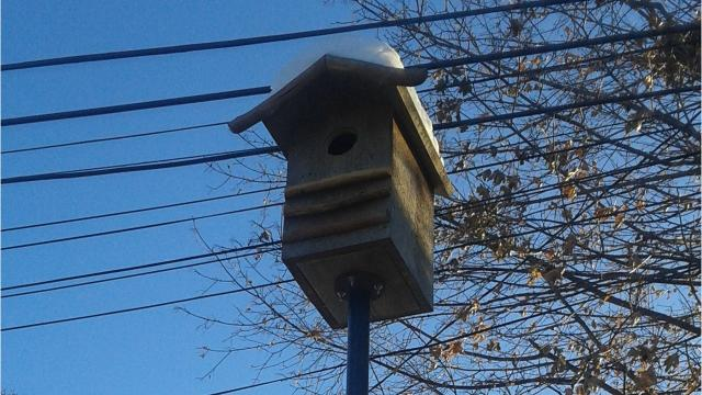 Members of two community-based groups talk about battling rats with raptors and with traps.