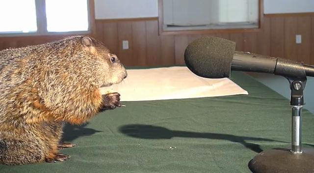 The Howell Conference and Nature Center's resident groundhog Woody fields questions about herself in an exclusive interview.