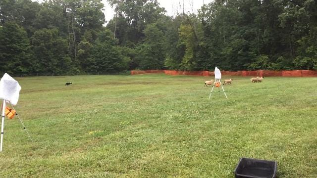 Charlotte and Twix perform at St.  Clair County 4-H Fair
