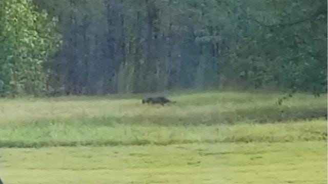 What appears to be a large cat caught on video has social media buzzing with the idea that a panther is in the state.